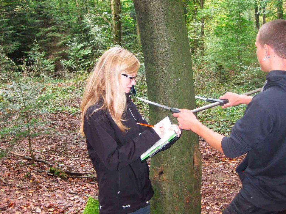 Arbeiten an Bäumen